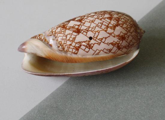 Cone-shell-2