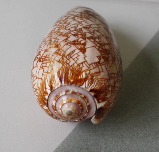 Cone-shell-3