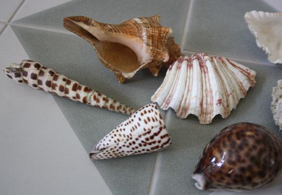 Shells-4